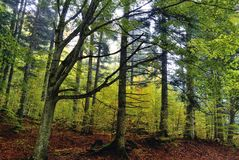 National park in autumn Royalty Free Stock Photography