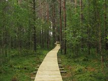 National Park. A beautifull nationalpark in Finland Stock Images