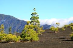 National Park Caldera de Taburiente in La Palma Stock Images
