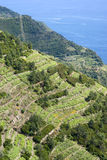 National Park of Cinque Terre, Italy Stock Images