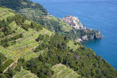 National Park of Cinque Terre royalty free stock photography