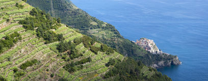 National Park of Cinque Terre royalty free stock images