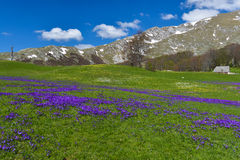 National park Durmitor at early spring, Montenegro Stock Photo