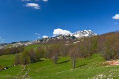 National park Durmitor at early spring, Montenegro. Landscape with trees and small village, National Park Durmitor, Montenegro Stock Photography