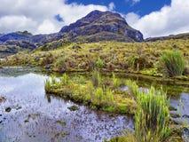 National Park El Cajas. Toreadora lake. Ecuador stock photos