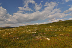In national park Hardangervidda, Norway Stock Photo