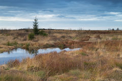 National Park Hautes Fagnes during Fall in Belgium. Royalty Free Stock Images