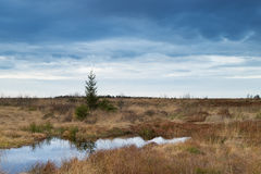 National Park Hautes Fagnes during Fall in Belgium. Stock Image