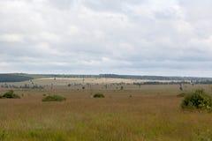 High Fens landscape Botrange Belgium Royalty Free Stock Images