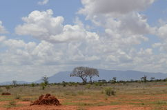 National Park  Kenya. National Park Tsavo East Kenya Stock Photos