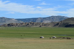National Park Khustain Mongolia Stock Images