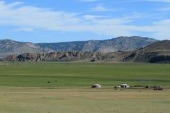 National Park Khustain Mongolia Stock Images