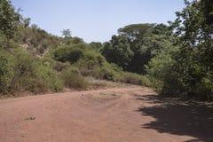 National Park Lake Manyara Stock Images