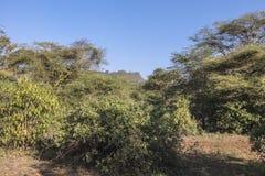 National Park Lake Manyara Royalty Free Stock Image