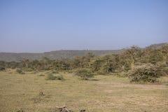 National Park Lake Manyara Royalty Free Stock Photography