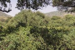 National Park Lake Manyara Stock Photo