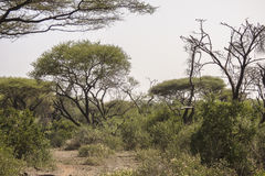 National Park Lake Manyara Stock Photography