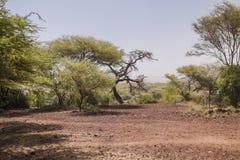 National Park Lake Manyara Royalty Free Stock Photos