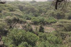 National Park Lake Manyara Royalty Free Stock Photo