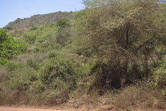 National Park Lake Manyara Royalty Free Stock Images