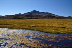 National Park Lauca Stock Image
