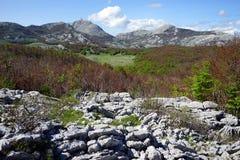 National park Lovcen Stock Photography
