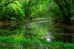 National Park Lunca Muresului Stock Photo