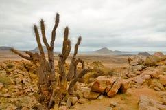 National Park Pan de Azúcar Stock Photography
