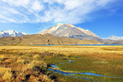 The national park Perito Moreno in Argentina. Royalty Free Stock Photography