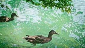 National Park Plitvicka jezera. stock video footage