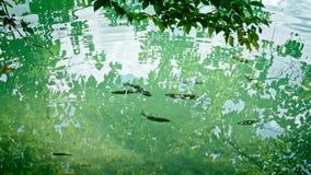 National Park Plitvicka jezera. stock video