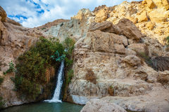 The national park and reserves Ein Gedi, Israel Royalty Free Stock Images