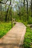 National Park Ropotamo Bulgaria. Wooden bridge leads to the Ropotamo river crossing green spring forest. Stock Photos