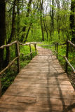 National Park Ropotamo Bulgaria. Wooden bridge leads to the Ropotamo river crossing green spring forest. Royalty Free Stock Photo
