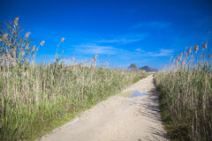 National Park S'Albufera. On the island of Mallorca Royalty Free Stock Photos