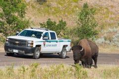 National Park Service, amerikanischer Büffel stockbilder