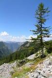 National Park Sutjeska Royalty Free Stock Photos