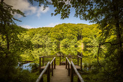 National park visitor platform in the beech forests on Rügen Island Royalty Free Stock Images