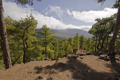 National Park way toi Pico Bejenado on the island La Palma, Cana Royalty Free Stock Photos