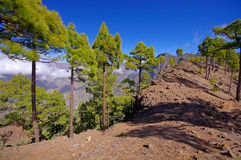National Park way toi Pico Bejenado on the island La Palma, Cana Stock Images