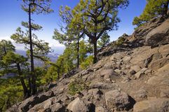 National Park way toi Pico Bejenado on the island La Palma, Cana Stock Photos