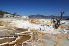 Yellowstone National Park U.S. National Park Service royalty free stock image