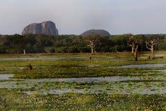 National park Yala. General view Stock Photo