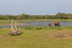 National park Yala. Landscape. Stock Photos