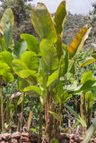 Tropical Rainforest, National Park Yasuni Royalty Free Stock Image