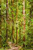 Amazonian jungle theme, South America Stock Images
