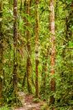 Amazonian jungle theme Stock Images