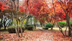 National parks of nami island, Korea. Stock Photo