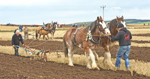National Ploughing Championship. An image of two pairs of Clydesdale horses each pulling pulling a vintage plough at the Scottish Ploughing Championship held at Stock Image