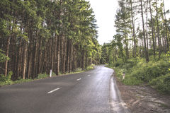 National Road Near Forest Royalty Free Stock Images